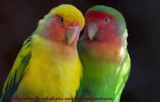 ratgeber-kleintiere-papagei-gaporniden Wildvögel ganzjährig füttern