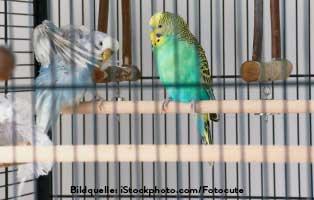 ratgeber-kleintiere-sittiche-käfig Kleintierratgeber