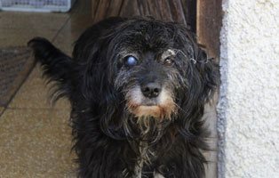 romy-katzenstation-muenchen-auge Hunde-Rentnergang