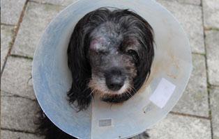 romy-katzenstation-muenchen-trichter Hunde-Rentnergang