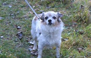 rosi-katzenstation-muenchen-vermittelt Hunde-Rentnergang