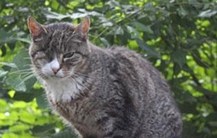 tommy-katzenstation-muenchen-fit Katzen-Seniorengruppe