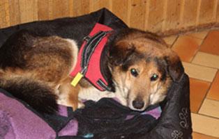 zeuss-katzenstation-muenchen-griechenland Hunde-Rentnergang