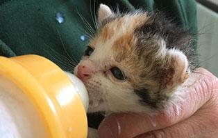 Katzenbaby-bk97-19-start-ins-leben-bueckeburg 64 Hunde aus Beschlagnahmung suchen Notfallpaten - Teil 4