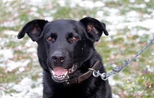 hund-addy-gluecklich-vermittelt Zuhause gefunden - Tierschutzliga Dorf