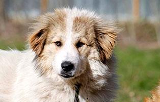 hund-alexa-gluecklich-vermittelt Glücklich vermittelt - Tiere haben ein Zuhause