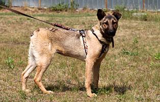 hund-belli-gluecklich-vermittelt Zuhause gefunden - Tierschutzliga Dorf