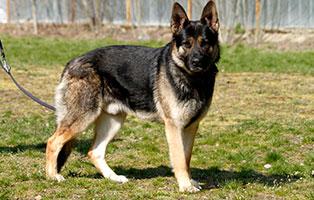 hund-eddy-gluecklich-vermittelt Zuhause gefunden - Tierschutzliga Dorf