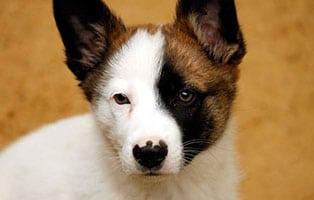 hund-kobold-gluecklich-vermittelt Glücklich vermittelt - Tiere haben ein Zuhause