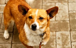 hund-kora-gluecklich-vermittelt Glücklich vermittelt - Tiere haben ein Zuhause