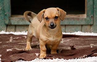hund-krümel-gluecklich-vermittelt Hundekind Krümel