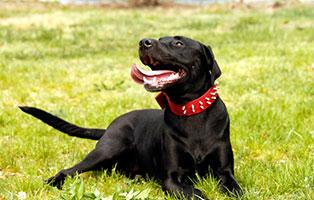 hund-lemmy-gluecklich-vermittelt Zuhause gefunden - Tierschutzliga Dorf