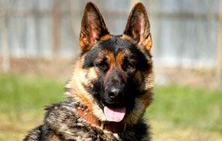 hund-leo-gluecklich-vermittelt Glücklich vermittelt - Tiere haben ein Zuhause