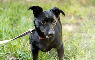 hund-melli-gluecklich-vermittelt Zuhause gefunden - Tierschutzliga Dorf