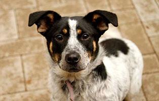 hund-milka-gluecklich-vermittelt Glücklich vermittelt - Tiere haben ein Zuhause
