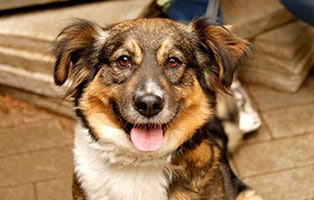 hund-sally-gluecklich-vermittelt Zuhause gefunden - Tierschutzliga Dorf