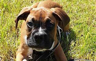 hundewelpe-jony-zuhause-gesucht-wiese Tierheim Wollaberg