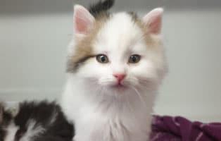 kater-wk136-wollaberg-start-ins-leben-paten 5 Katzenbabys aus Bückeburg suchen Start-ins-Leben Paten