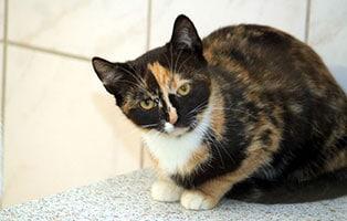 katze-allegra-gluecklich-vermittelt Zuhause gefunden - Tierschutzliga Dorf
