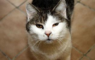 katze-heidi-gluecklich-vermittelt Zuhause gefunden - Tierschutzliga Dorf