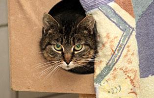 katze-lunagluecklich-vermittelt Glücklich vermittelt - Tiere haben ein Zuhause
