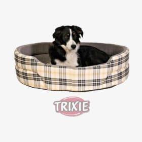 ratgeber hunde produkt bett