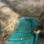 beschlagnahmung-bueckeburg-katzen-handtuch-150x150 Katzen in Bückeburg beschlagnahmt