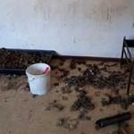 beschlagnahmung-dreck-150x150 22 Katzen und 8 Hunde aus der Hölle befreit – Leiden für das schnelle Geld