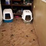 beschlagnahmung-katzenklos-150x150 22 Katzen und 8 Hunde aus der Hölle befreit – Leiden für das schnelle Geld