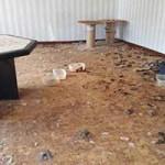 beschlagnahmung-katzenzimmer-150x150 22 Katzen und 8 Hunde aus der Hölle befreit – Leiden für das schnelle Geld