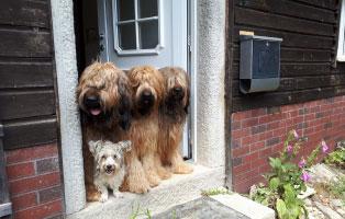 breitenberg-4hunde-tuer Hilfe für Louisa - Persermix Katze in Not
