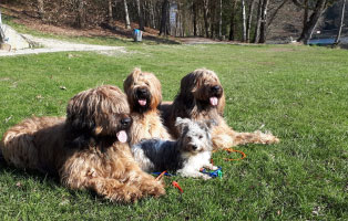 breitenberg-4hunde-wiese Breitenberg beginnt zu leben