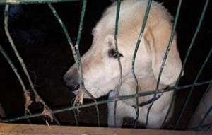 hund-04-tierschutzliga-dorf-300x191 22 Katzen und 8 Hunde aus der Hölle befreit – Leiden für das schnelle Geld
