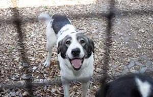 hund-H194_19-tierschutzliga-dorf-300x191 22 Katzen und 8 Hunde aus der Hölle befreit – Leiden für das schnelle Geld