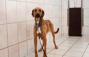 hund-H196_19-tierschutzliga-dorf-300x191 22 Katzen und 8 Hunde aus der Hölle befreit – Leiden für das schnelle Geld