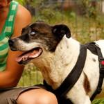 hund-aldi-verstorben-tierschutzliga-dorf-150x150 Aldi – Ruhe in Frieden