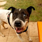 hund-aldi-verstorben-tierschutzliga-dorf-laechelt-150x150 Aldi – Ruhe in Frieden