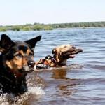 hund-rambo-verstorben-tierschutzliga-dorf-baden-150x150 Rambo - hat seine letzte Reise angetreten