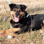 hund-rambo-verstorben-tierschutzliga-dorf-feld-150x150 Rambo - hat seine letzte Reise angetreten