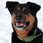 hund-rambo-verstorben-tierschutzliga-dorf-portrait-150x150 Rambo - hat seine letzte Reise angetreten
