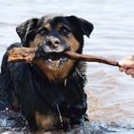 hund-rambo-verstorben-tierschutzliga-dorf-stock-150x150 Rambo - hat seine letzte Reise angetreten