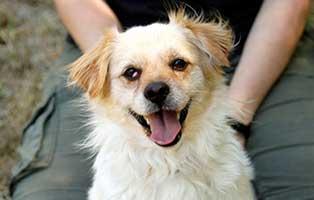hund-schnuck-kettenhund-beinoperation-portrait Auf Archimedes ist geschossen worden