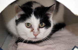 katze-mietzie-gluecklich-vermittelt Glücklich vermittelt - Tiere haben ein Zuhause