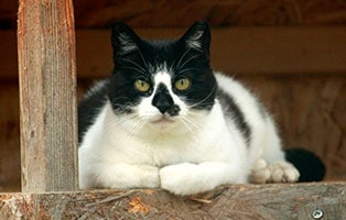 katze-mobby-gluecklich-vermittelt Zuhause gefunden - Tierschutzliga Dorf