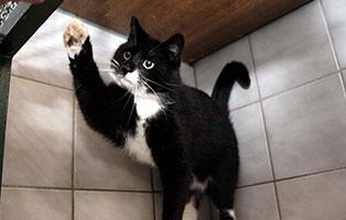 katze-paul-gluecklich-vermittelt Glücklich vermittelt - Tiere haben ein Zuhause