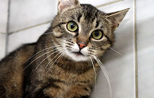 katze-pettersen-gluecklich-vermittelt Zuhause gefunden - Tierschutzliga Dorf