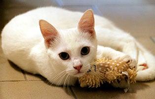 katze-snuggles-gluecklich-vermittelt Glücklich vermittelt - Tiere haben ein Zuhause