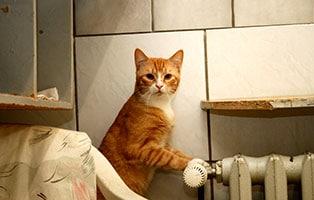 katze-tigger-gluecklich-vermittelt Glücklich vermittelt - Tiere haben ein Zuhause