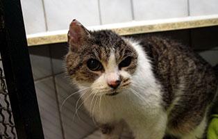 katze-trudy-gluecklich-vermittelt Zuhause gefunden - Tierschutzliga Dorf