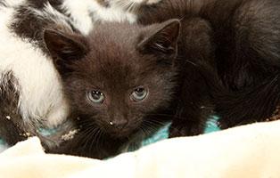 katzenbaby-kk-326-19-maennlich-start-ins-leben 4 Katzenbabys aus dem Tierschutzliga-Dorf suchen einen Start-ins-Leben Paten